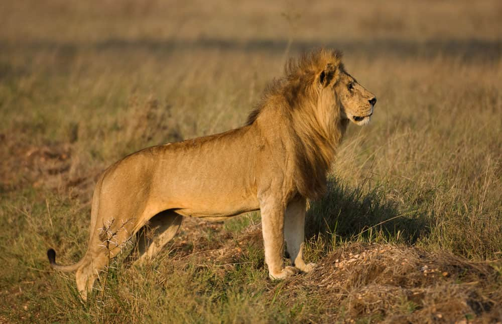 Tanzania safari 7