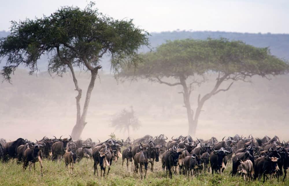 Tanzania safari 8