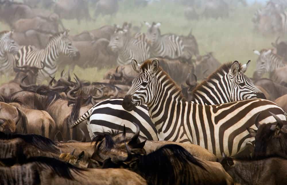 Tanzania safari 9