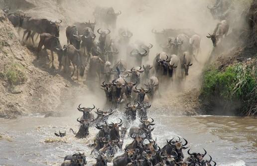 Tanzania Safaris: North vs South