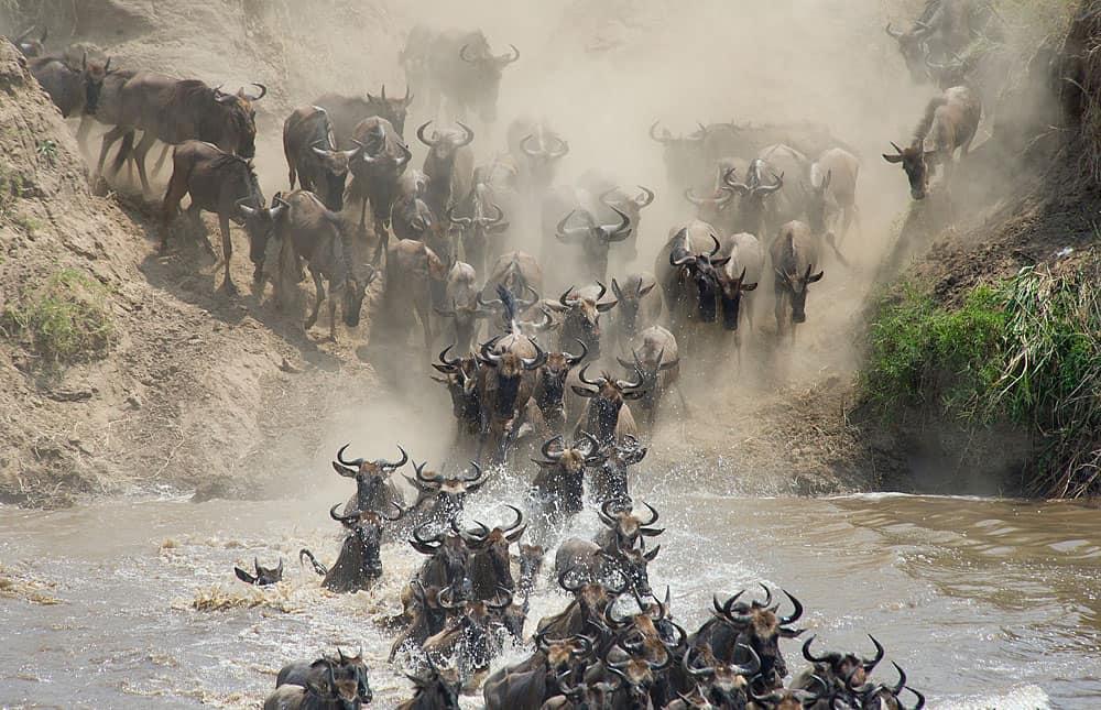 Tanzania safari 10