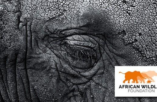 African Wildlife Foundation – The illegal wildlife trade
