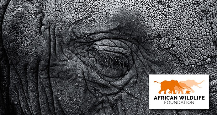 African Wildlife Foundation – The illegal wildlife trade