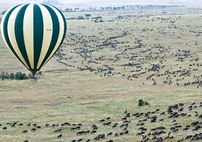 Top 10 Best Wildlife Migrations in the World