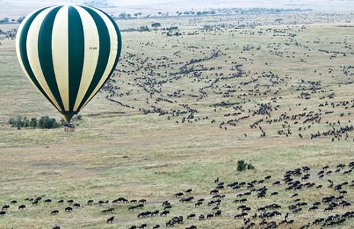 Top 10 Best Wildlife Migrations in the World