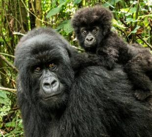 Gorilla Safari & Lake Bunyonyi