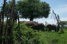Classic Southern Tanzania Safari