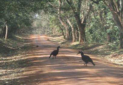 12-Day Birding & Wildlife Safari in Uganda