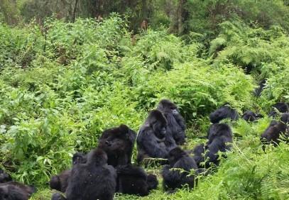 Uganda & Rwanda Wildlife Safari