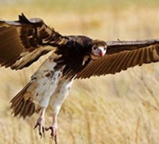 Livingstone Birding Trail
