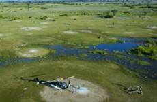 Delta Explorer – River Safari