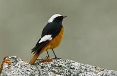Nepal Birding Safari