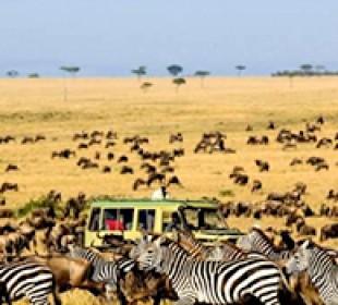 Ngorongoro and Serengeti Safari