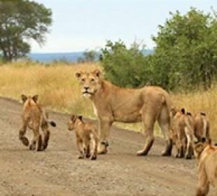5-Day Kruger & Sabi Safari