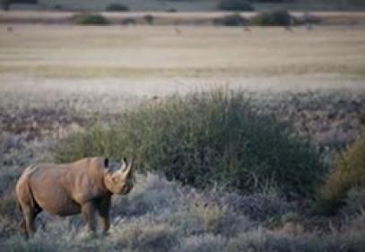 Namibian Sands Luxury Safari