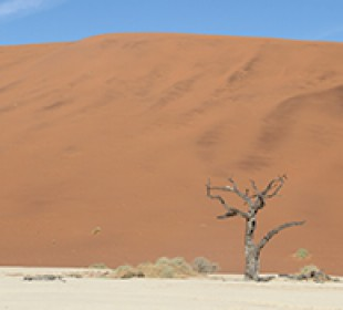 Namibia Guided Lodge Safari