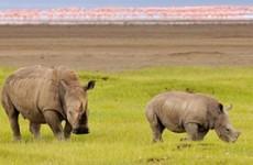 Nairobi, Amboseli, Nakuru & Mara Safari