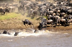 5-Day Masai Mara Safari