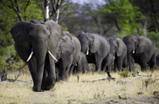 Zimbabwe Highlights Safari