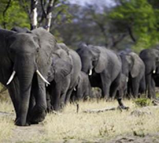 Zimbabwe Highlights Safari