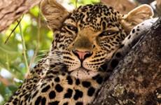 3-Day Selous Game Reserve Safari