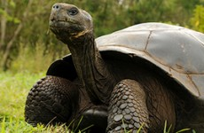 Galapagos Safari Wildlife Adventure
