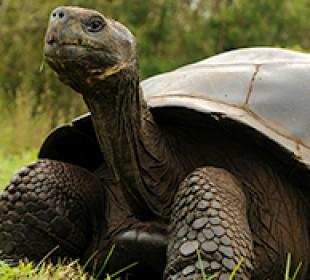 Galapagos Safari Wildlife Adventure