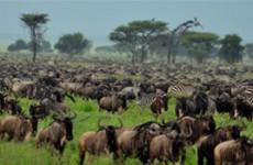 Pure Wilderness Safari
