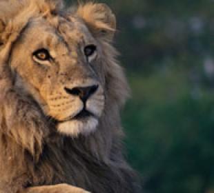 Magical Tanzania Safari