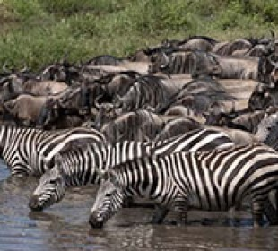 Jungle Explorer Safari