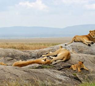 Kenyan Wildlife Safari