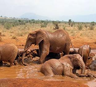 Eastern Kenya Safari