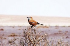 Iran Bird Watching Tour