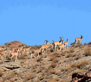 Iran Wildlife Tour