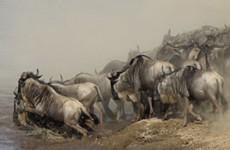 Great Wildebeest Migration & Kilimanjaro Photo Safari