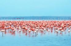 Samburu, Lake Nakuru & Masai Mara Safari