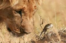 Kenya Luxury Lodge Safari