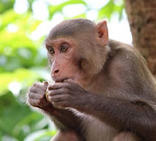 India Primate Tour