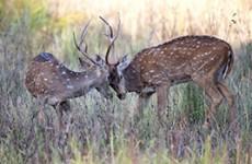 Wildlife, Culture & Birding Safari