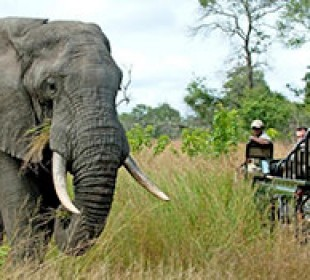 Essential Kruger Safari