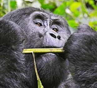 Best of Uganda