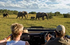 Cape Town & Malaria Free Eastern Cape Safari