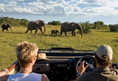 Cape Town & Malaria Free Eastern Cape Safari