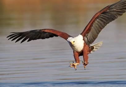 Botswana Budget Fly-in Safari