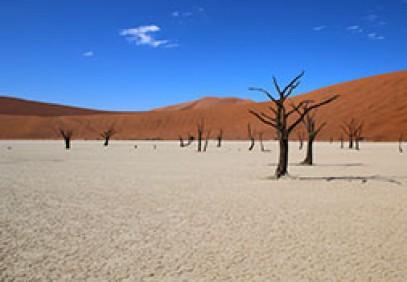 Safari to Namibia