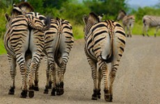 Classic Safari & Panoramic Tour