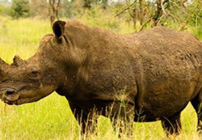 Exclusive Timbavati Lodge Safari