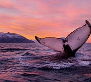 Noorderlicht Whale and Aurora Cruise