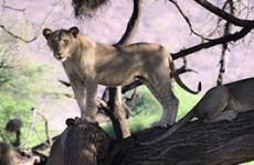 Kenya and Tanzania Group Safari