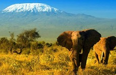 Amboseli Safari
